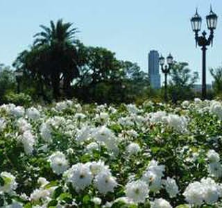 Adventures at Rosedal Park: Flowers, gardens, and lakes in Buenos Aires's gallery image