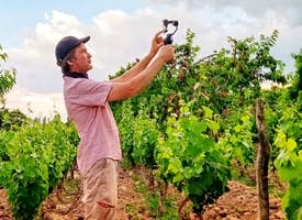 It is all about Malbec: A guided walking tour of an Argentine vineyard's thumbnail image