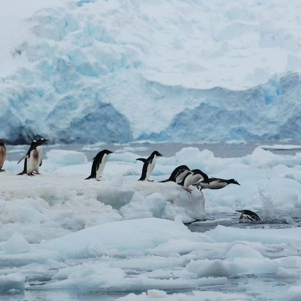 Antarctica and its Penguins's main gallery image
