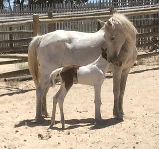 My Little Pony's gallery image