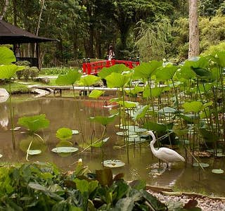 Botanical Garden Live Streaming's gallery image