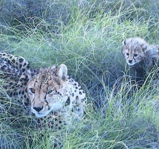 Fascinating  Wildlife Encounters's gallery image