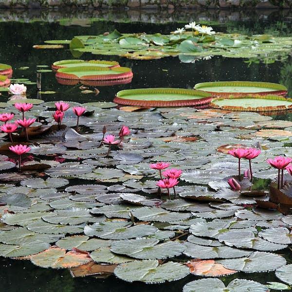Jardin Botanique de Rio's main gallery image