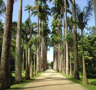 Jardin Botanique de Rio's gallery image
