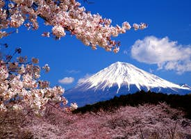 Discover Mt. Fuji Online Experience's thumbnail image