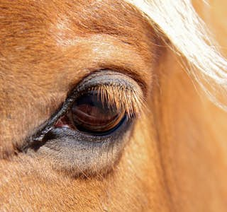 All About Horses's gallery image