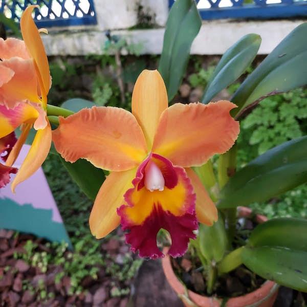 Rio de Janeiro Botanical Garden's main gallery image