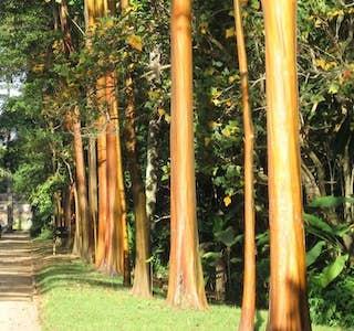 Rio de Janeiro Botanical Garden's gallery image