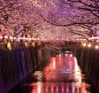 "Cherry Blossom Season ""Hanami"" Online Experience's gallery image"