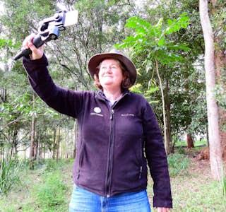 Koala discovery walk's gallery image