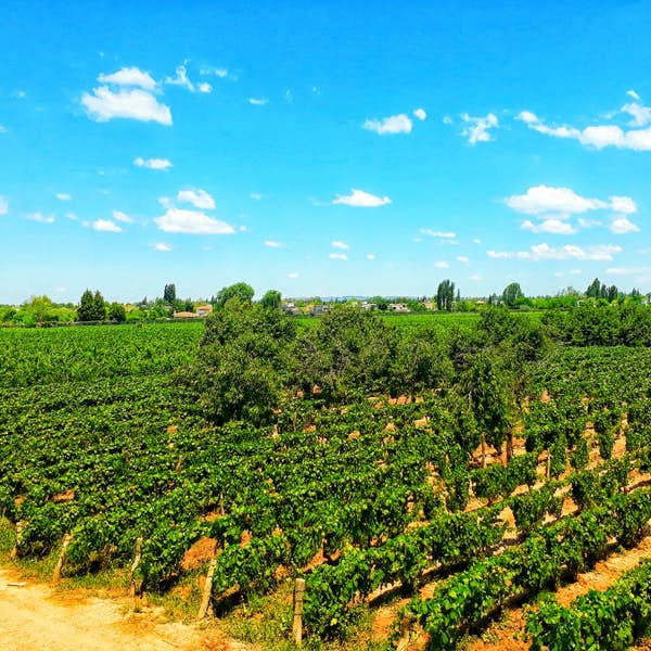 It is all about Malbec: A guided walking tour of an Argentine vineyard's main gallery image