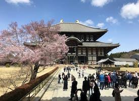Nara Todaiji Temple Tour's thumbnail image